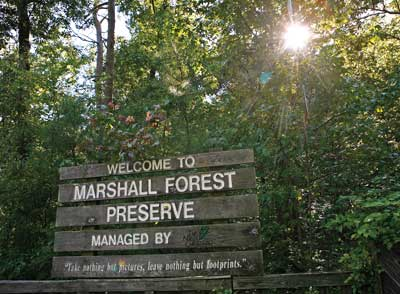 marshall forest